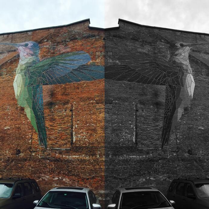 Image Selection for the Mission-Driven. Humingbird in color v. black/ white