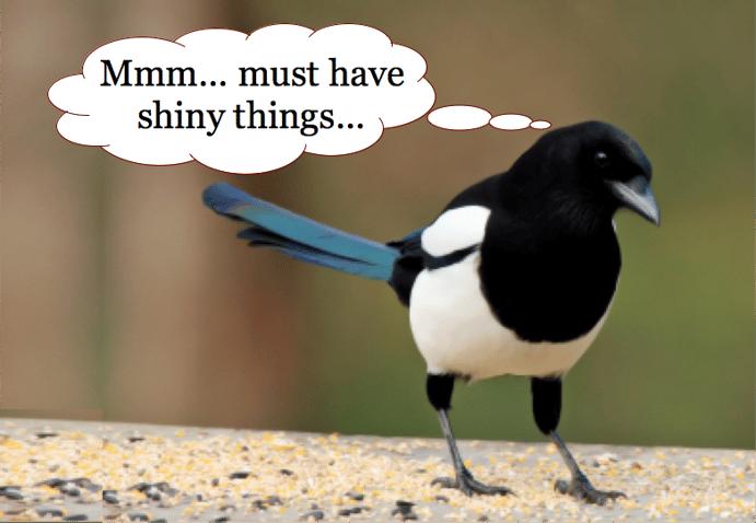 Magpie2 bird_i-love-shiny-things
