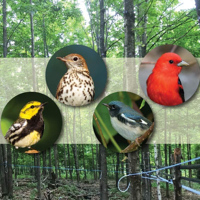 AVt_bird_friendly_maply_habitat_800x800