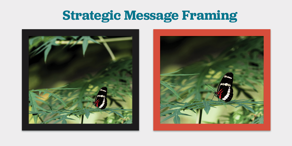 Message framing example with two butterfly images
