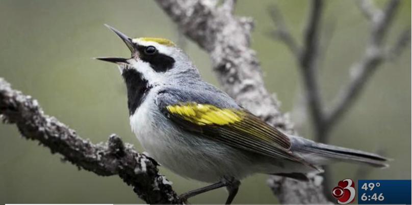 Bird-Friendly-Maple-Project_WCAX_4-2-19