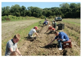 RPS_planting-rows